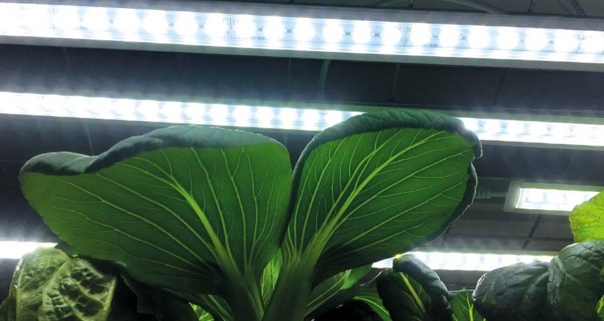 LED Plantelys, Lyslist startpakke 85 cm